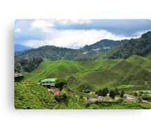Tea Plantation Canvas Print