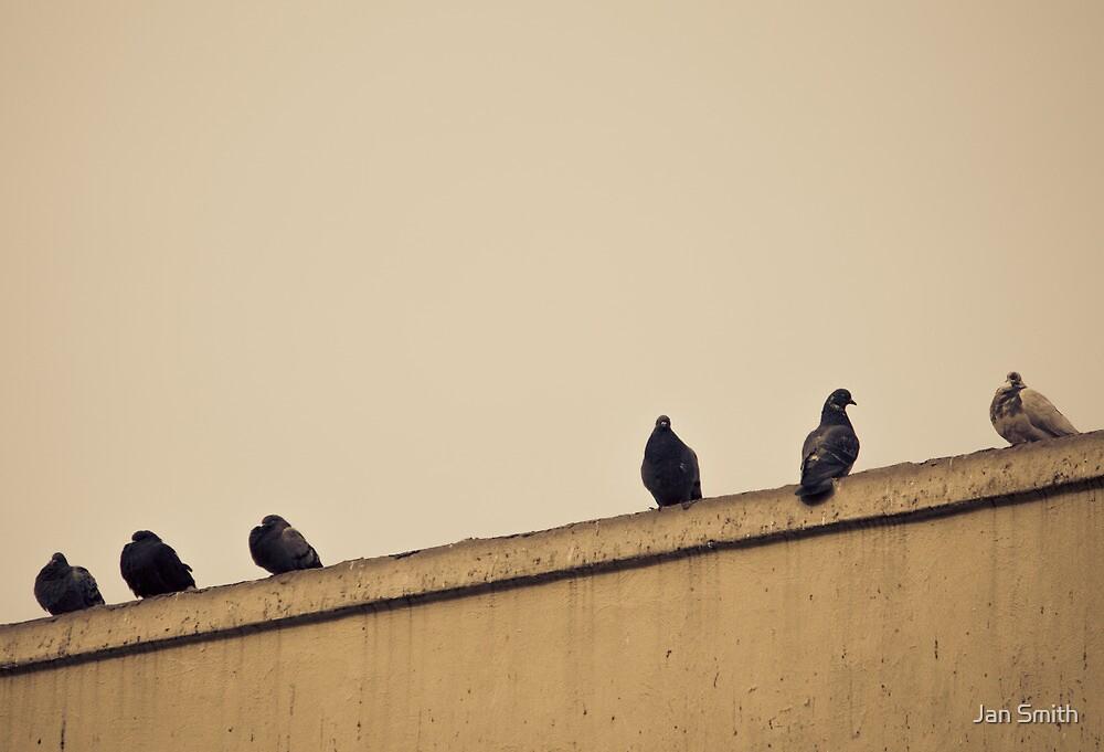 New York City, Pigeons by Jasper Smits