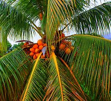 Palm palm palm. by xenxen