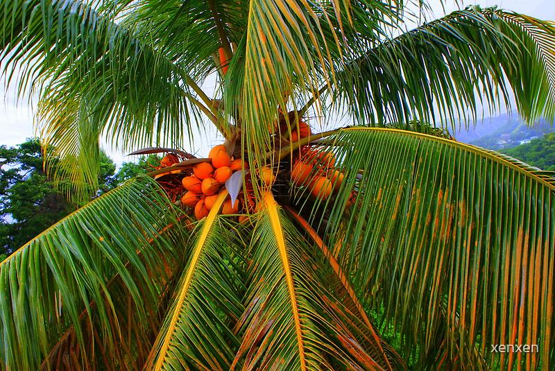 Palm palm palm. by xenxen