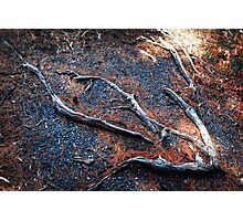 Root 4 Rectangle Photographic Print