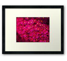 Breathtaking Mesembryanthemums Framed Print