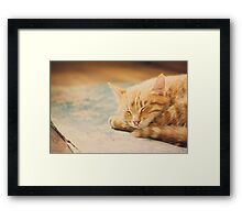 Little Red Kitten Sleeping On Bed Framed Print