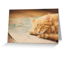 Little Red Kitten Sleeping On Bed Greeting Card