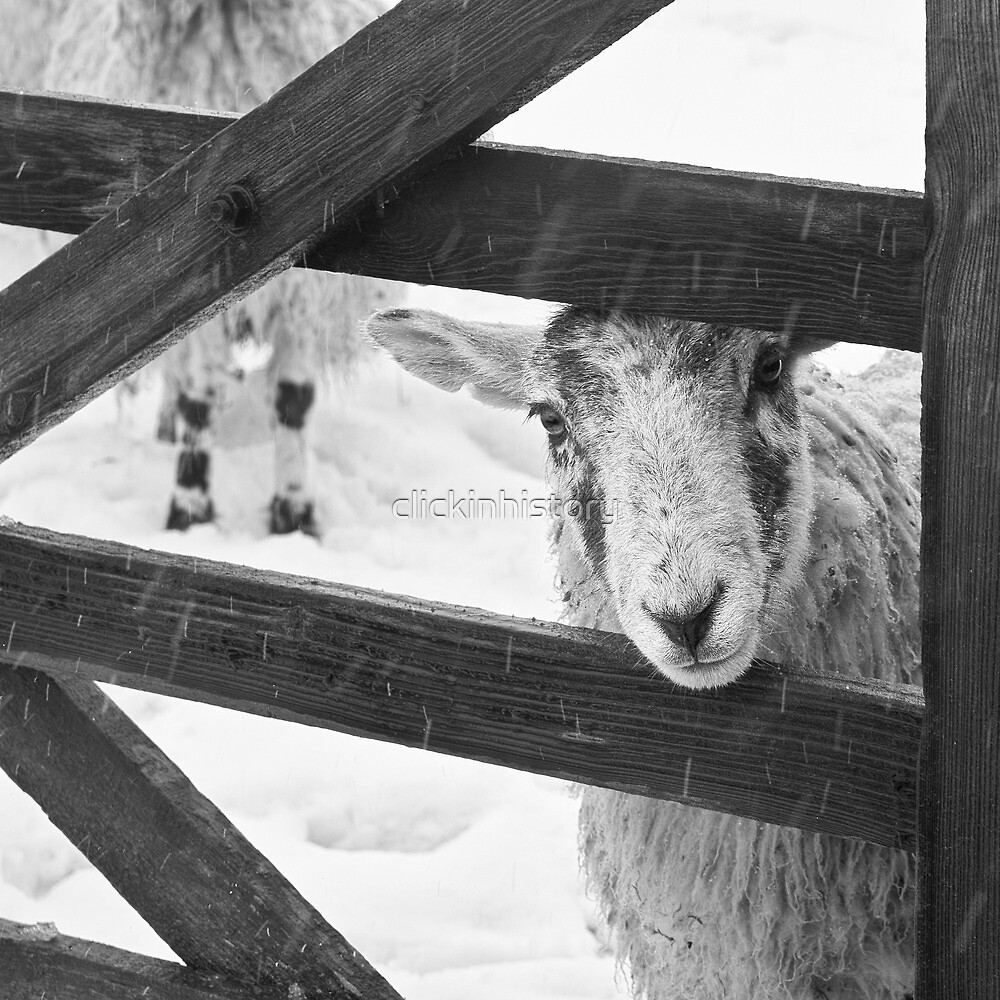 Brother, can you spare a bail of hay? by clickinhistory