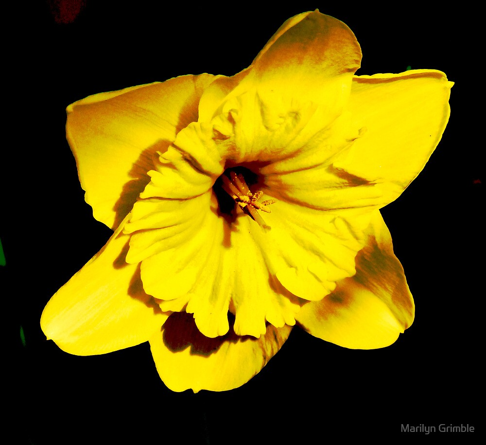 Blowing My Own Trumpet ... by Marilyn Grimble