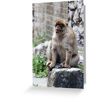 Barbary Macaques In Gibraltar Greeting Card