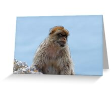 A Barbary Macaques In Gibraltar Greeting Card