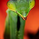 Mantis portrait by jimmy hoffman