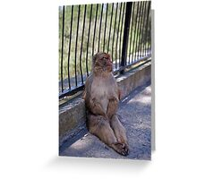 A Barbary Macaque resting In the shade in Gibraltar Greeting Card