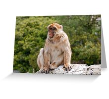 Barbary Macaque In Gibraltar Greeting Card