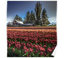 Barns And Blossoms Poster