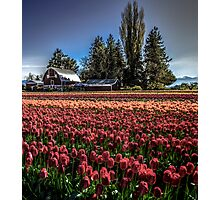 Barns And Blossoms Photographic Print