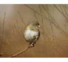Little Junko Photographic Print