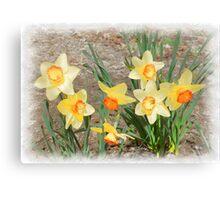Spring, Take a Bow Canvas Print