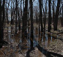 Walk in the swamp  by DreamCatcher/ Kyrah