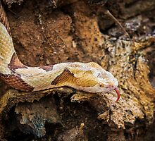 Copperhead by J. Day