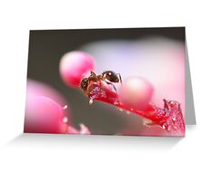 Little Ant on Starfruit Tree Flower Greeting Card
