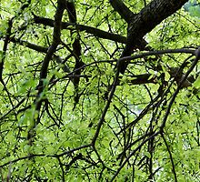 Green Tree Branches by Cynthia48