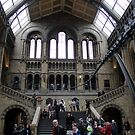 Inside the Natural History Museum in London by magiceye