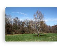Spring Birch Tree Canvas Print