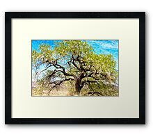 Old Cottonwood Framed Print