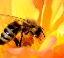 Bee in Yellow Flower by Dianne Phelps