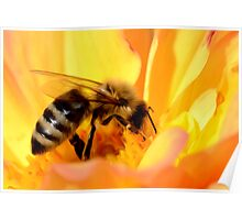 Bee in Yellow Flower Poster