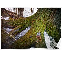 Tree Trunk on Ice Poster