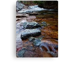 Looking Up Trout Brook Canvas Print