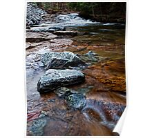 Looking Up Trout Brook Poster