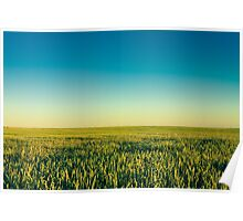 Green Barley Ears Poster