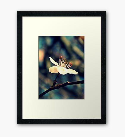 Solo Framed Print