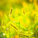 Fresh Grass On Meadow by GrishkaBruev