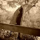 Old Hollow Tree By Bridge, Ringwood Manor Property by Jane Neill-Hancock