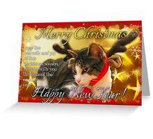 Christmas card kitty3 Greeting Card