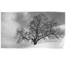 The Old OAk in B&W Poster