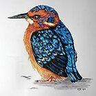 Baby Kingfisher by KarenJI1962