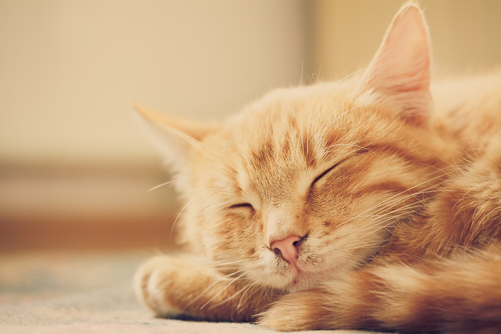 Little Red Kitten Sleeping On Bed by GrishkaBruev