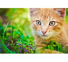 Young Kitten Is Hunting On Green Grass Photographic Print