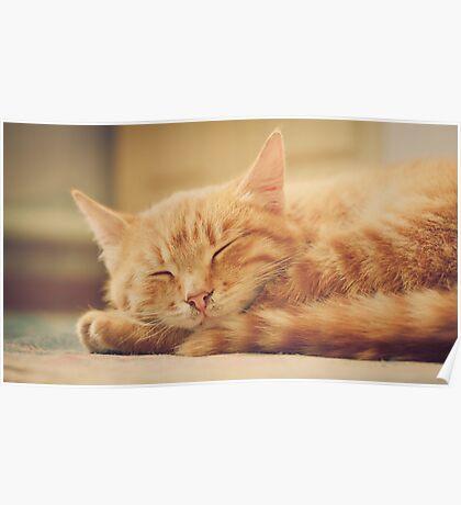 Little Red Kitten Sleeping Poster