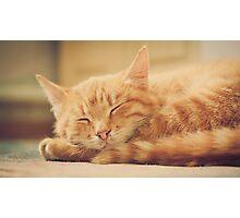 Little Red Kitten Sleeping Photographic Print