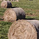 Hay Hay Hay by Zen-Art (Zenith)