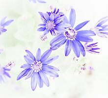 Faded Blue Flowers by mlphoto