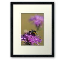 Busy Bee at Work Framed Print