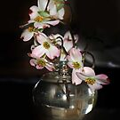 Dogwood by Bine