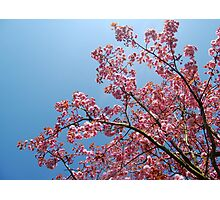 In Blossom Photographic Print