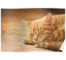 Little Red Kitten Sleeping On Bed Poster