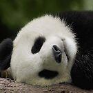 Panda  by SandraWidner