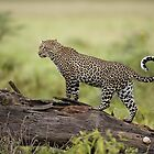Animal Instinct by SandraWidner